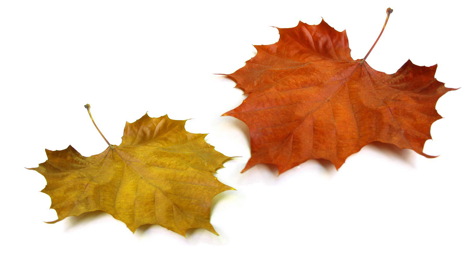 2018 leaf collection begins monday november 5th the city of